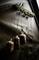 Вешалка для оснасток RidgeMonkey Hangman Rig Rack - фото 11665
